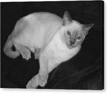 Tonkinese Cat In Bw With Blue Eyes Canvas Print by Linda Phelps