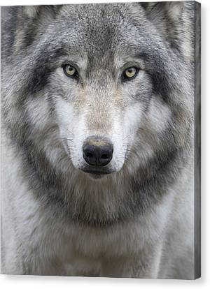 Top Dog Canvas Print by Rudy Pohl
