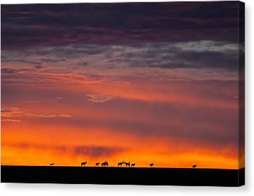 Topi Herd Sunrise Canvas Print by Mike Gaudaur