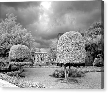 Topiary Canvas Print by Terry Reynoldson