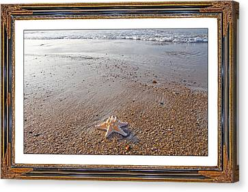 Topsail Island The Only One Canvas Print by Betsy C Knapp