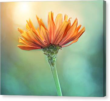 Torch Song Canvas Print by Amy Tyler