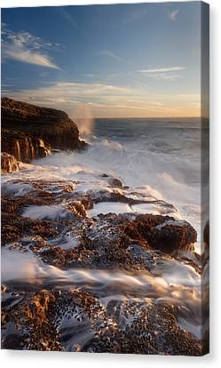 Torment Panther Beach Canvas Print by Francesco Emanuele Carucci