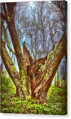 Torn By Time II Canvas Print by Dan Carmichael