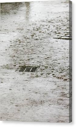 Torrential Rain Canvas Print by Ashley Cooper