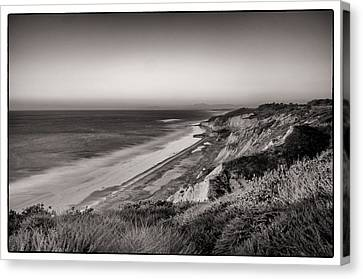 Torrey Pines Canvas Print by Tanya Harrison