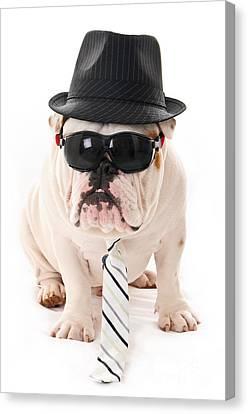 Tough Dog Canvas Print by Jt PhotoDesign