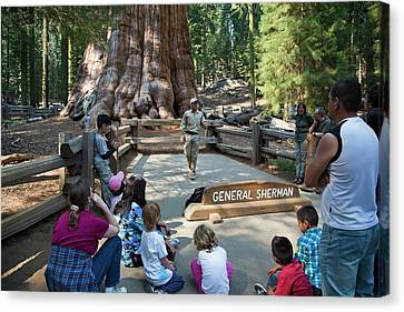 Tourists Visiting General Sherman Tree Canvas Print by Jim West