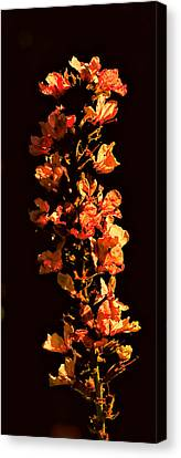 Tower Bloom Canvas Print by Leif Sohlman
