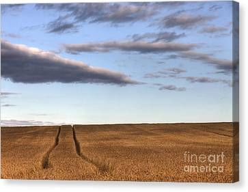 Tracks In The Wheat Canvas Print by Dan Jurak