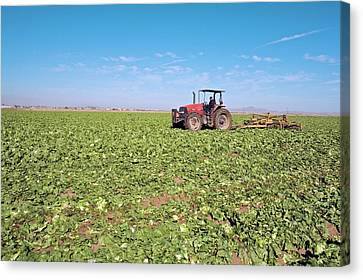 Tractor Clearing A Field Canvas Print by Jim West