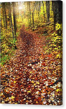 Trail In Fall Forest Canvas Print by Elena Elisseeva