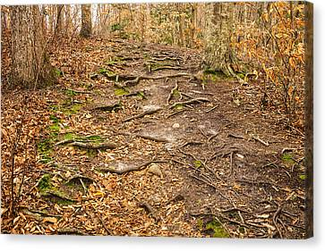 Trail In Ryder Conservation Land Canvas Print by Frank Winters