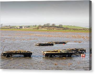 Trailers Covered By Flood Water Canvas Print by Ashley Cooper