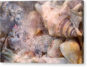 Tranquil Seashells Canvas Print by Betsy Knapp