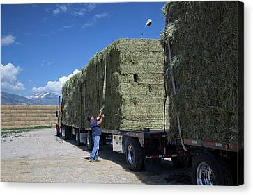 Transporting Bales Of Hay Canvas Print by Jim West