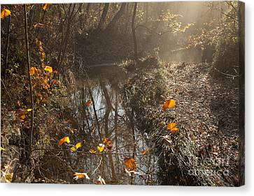 Travertine Creek In The Woods Canvas Print by Iris Greenwell