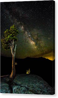 Tree Amongst The Stars Canvas Print by Mike Lee