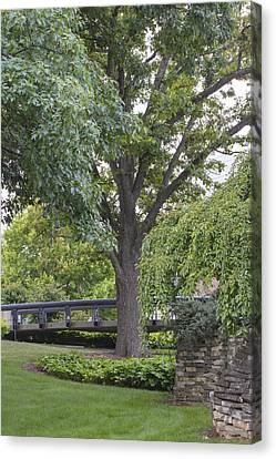 Tree And Bridge At Wharton Center Canvas Print by John McGraw