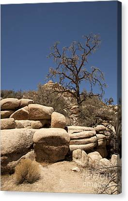 Tree At Joshua Tree Canvas Print by Amanda Barcon