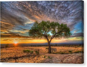 Tree At Sunset Canvas Print by William Wetmore