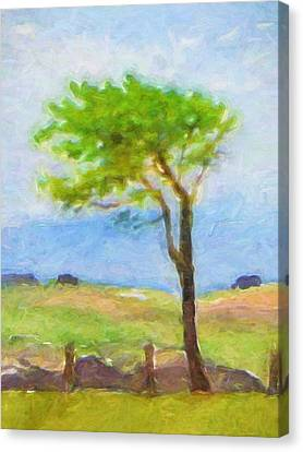 Tree At The Coast Canvas Print by Lutz Baar