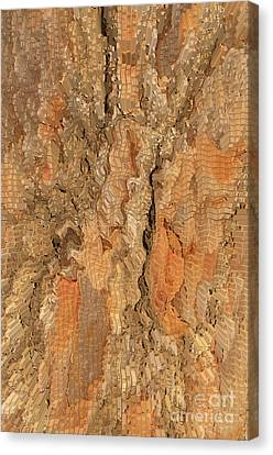 Tree Bark Abstract Canvas Print by Cindy Lee Longhini