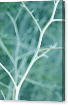 Tree Branches Abstract Turquoise Canvas Print by Jennie Marie Schell