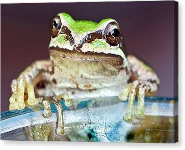 Tree Frog Canvas Print by Jean Noren