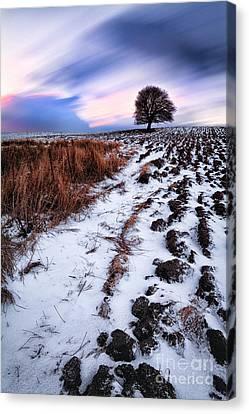 Tree In A Field  Canvas Print by John Farnan