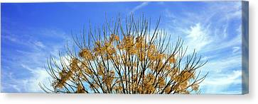 Tree In Autumn Against A Cirrus Cloud Canvas Print by Panoramic Images