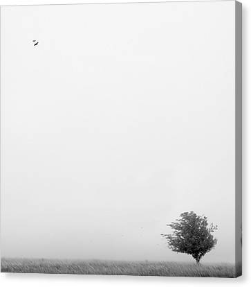 Tree In The Wind Canvas Print by Mike McGlothlen