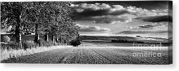 Tree Line Canvas Print by Rod McLean