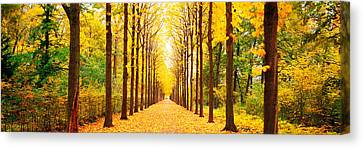 Tree-lined Road Schwetzingen Germany Canvas Print by Panoramic Images