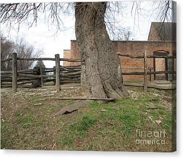 Tree Near The Gaol Canvas Print by Ezra Hoek