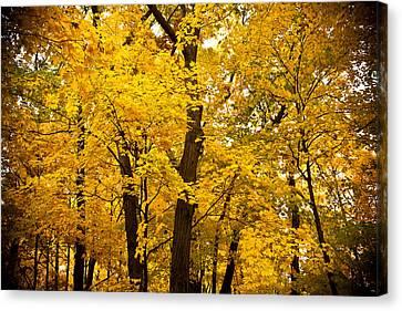 Tree Of Gold Canvas Print by Kamil Swiatek