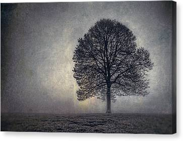 Tree Of Life Canvas Print by Scott Norris