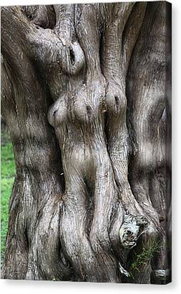Tree Of Souls Canvas Print by Martin Sullivan