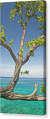 Tree Overhanging Sea At Xtabi Hotel Canvas Print by Panoramic Images