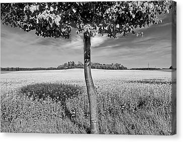 Tree Shadow Canvas Print by EXparte SE