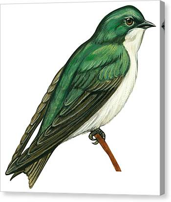 Tree Swallow  Canvas Print by Anonymous