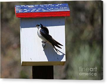 Tree Swallow Home Canvas Print by Mike  Dawson