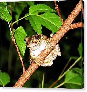 Tree Toad Night Canvas Print by Tamara Stickler