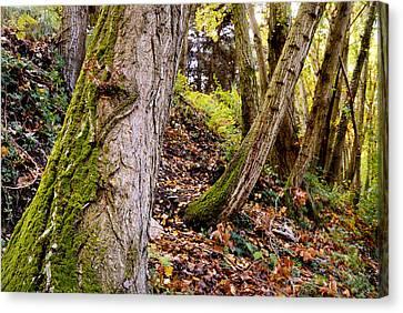 Tree Traces Canvas Print by Guido Montanes Castillo