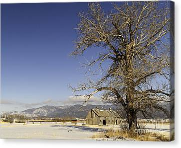 Tree With Barn Canvas Print by Sue Smith