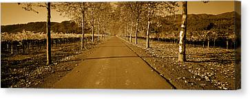 Trees Along A Road, Beaulieu Vineyard Canvas Print by Panoramic Images