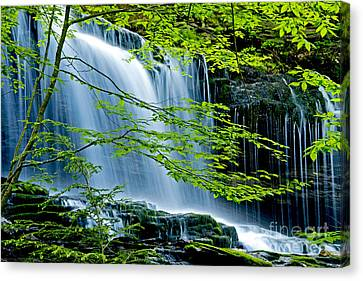 Trees And Falls Canvas Print by Paul W Faust -  Impressions of Light