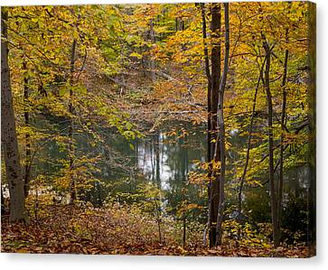 Trees And Water  Canvas Print by Tim Fitzwater