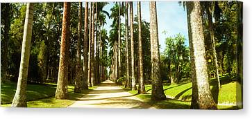 Trees Both Sides Of A Garden Path Canvas Print by Panoramic Images