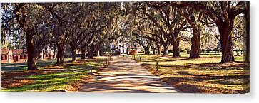 Trees Bots Sided Of A Dirt Road, Boone Canvas Print by Panoramic Images